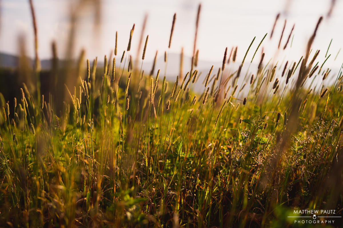 tall grasses at black balsam knob