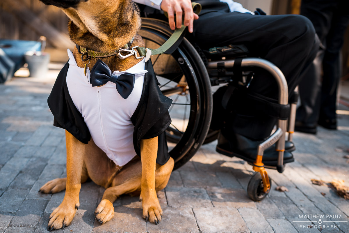 Dog in wedding tux sitting next to groom in wheelchair before wedding